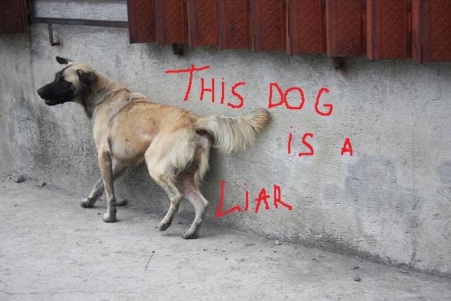 liar dog